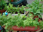 crops in pots